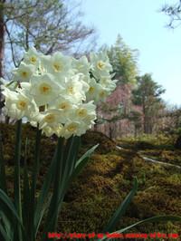 嵐山、宝厳院の庭園にて
